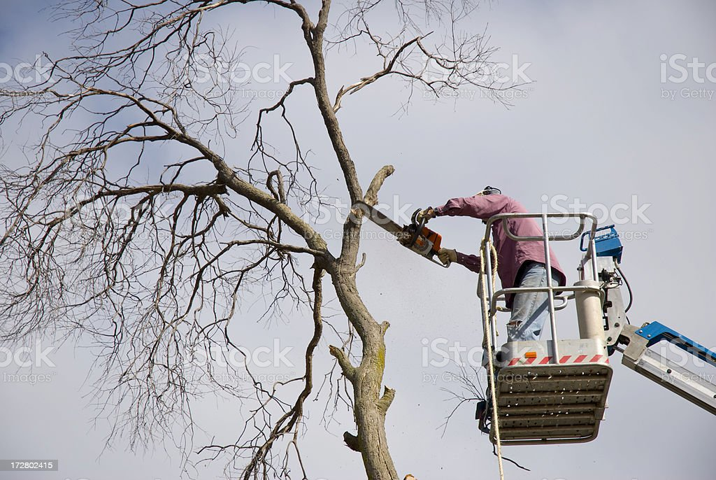 Trimming Trees with Chainsaw stock photo