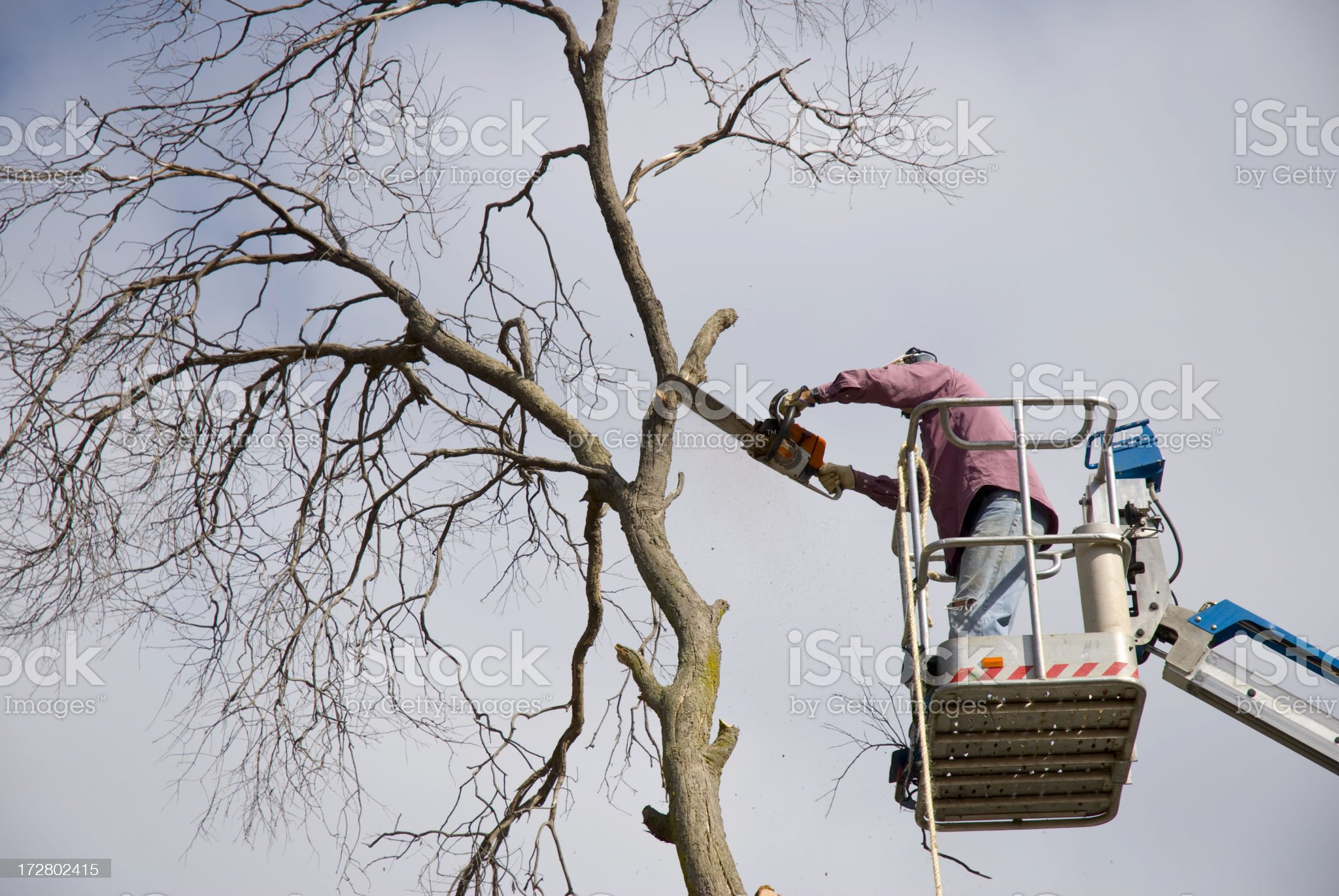 Trimming Trees with Chainsaw royalty-free stock photo