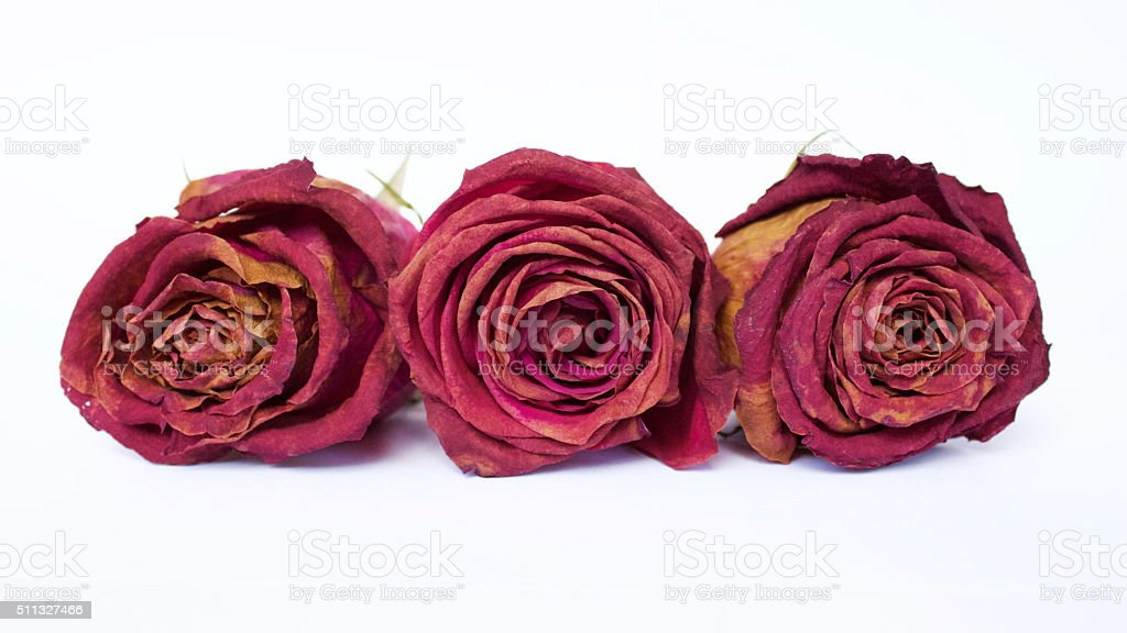 Trio Dead Roses - Row stock photo