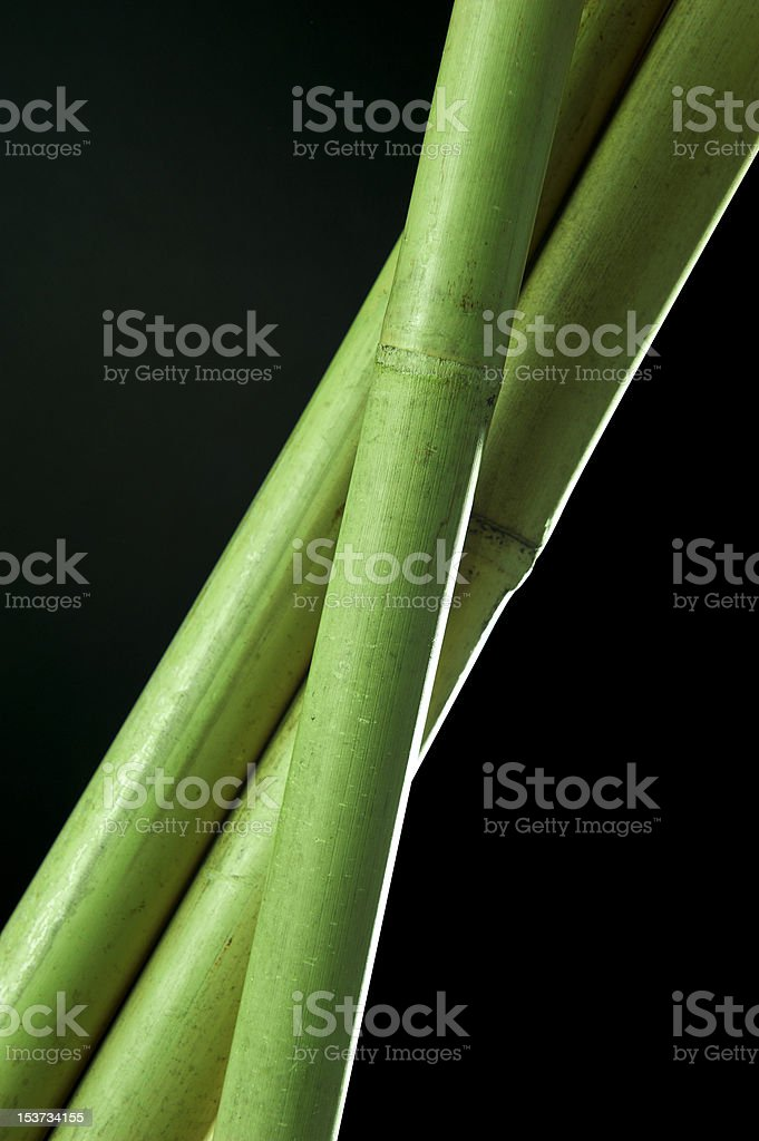 trio of bamboo stalks royalty-free stock photo