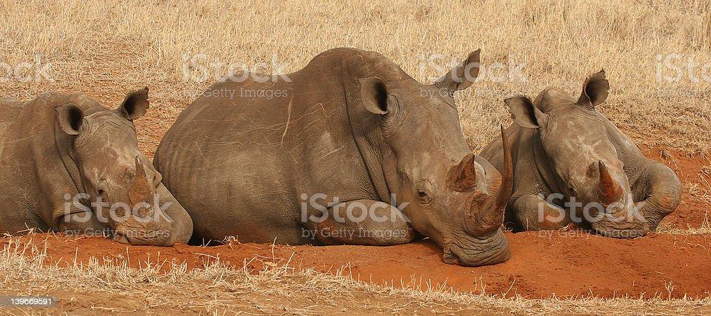 Trio of Rhino (postbox) stock photo