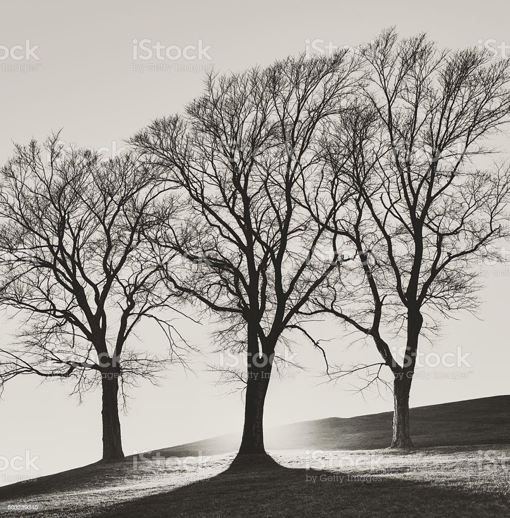 Trio of Trees stock photo