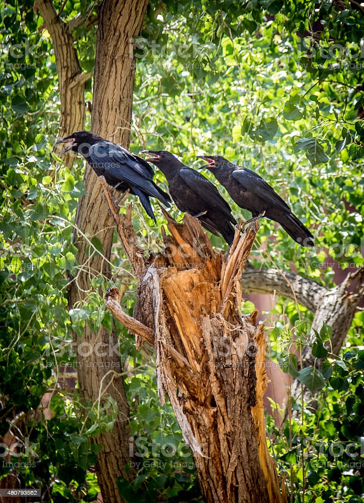 Triple Crow stock photo