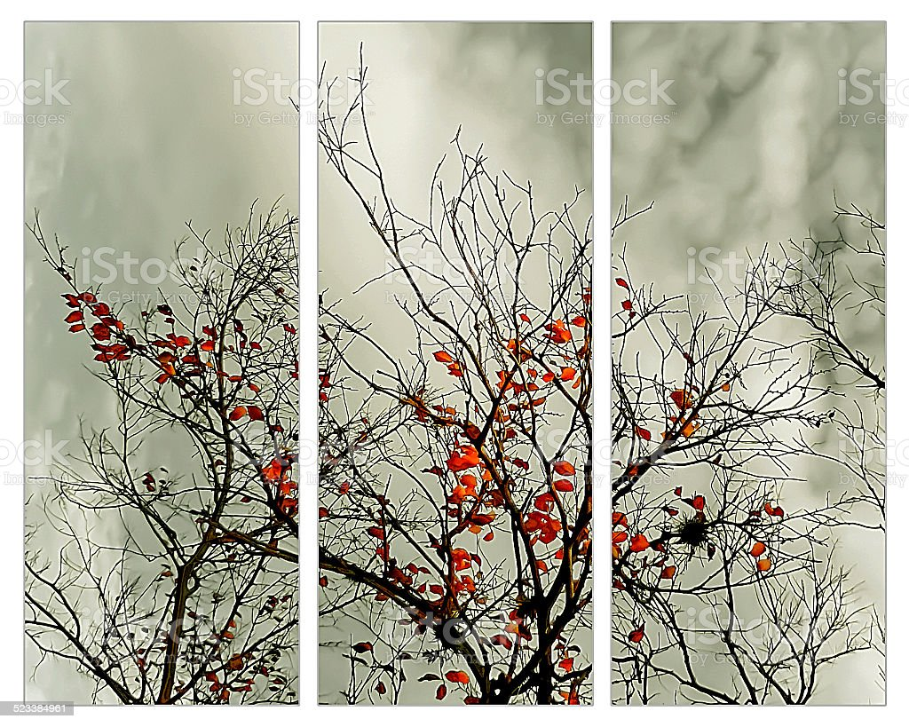 Triptych with natural motive stock photo