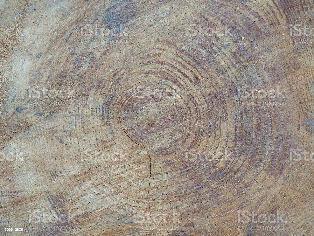 Tronco di pino centenario da vicino stock photo