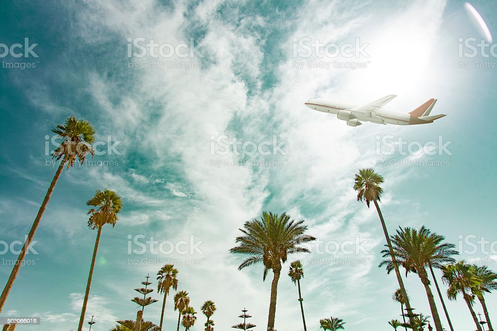 airplane flying over tropic palm trees on a sunny day