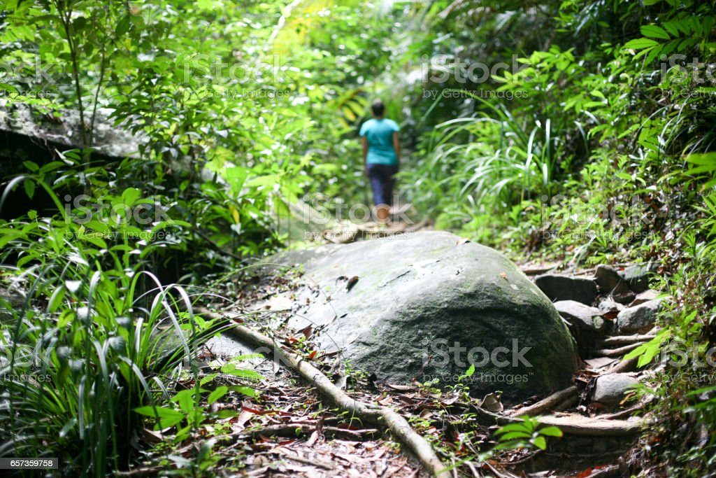 Tropic forest in Malaysia with a man on the background stock photo
