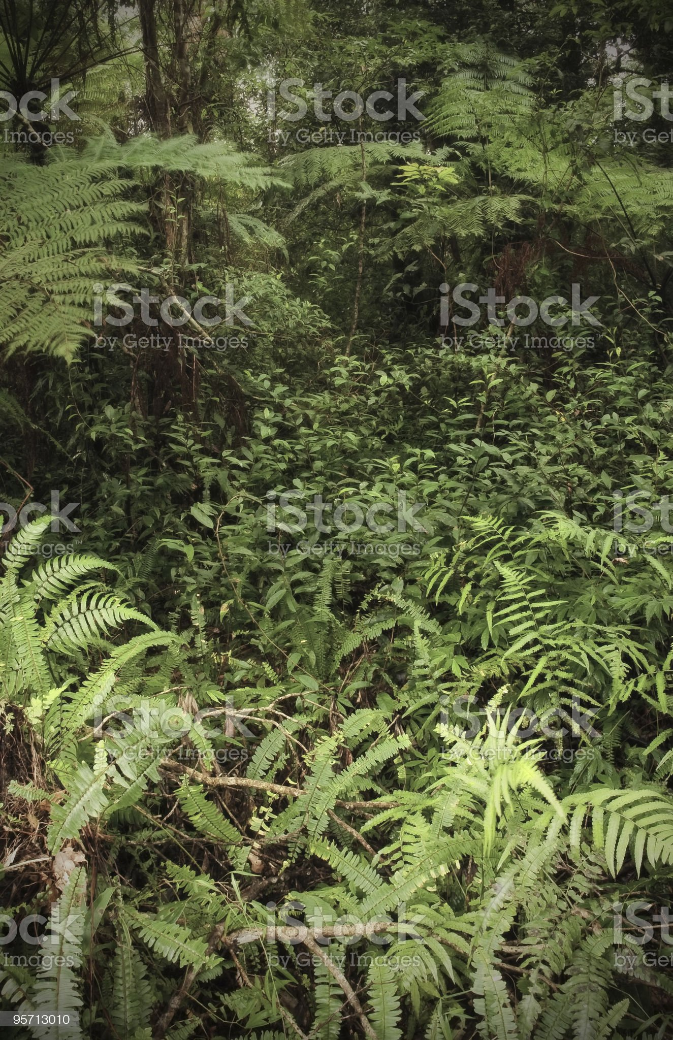Tropic scenery royalty-free stock photo