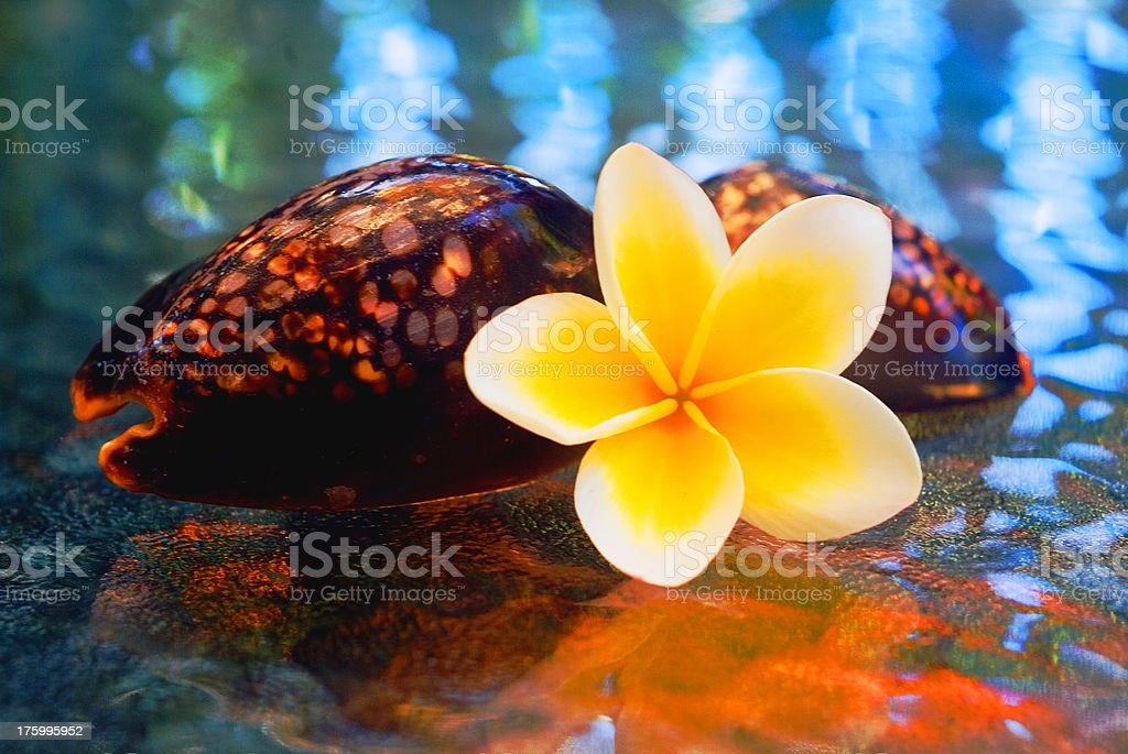 Tropic shapes 2 royalty-free stock photo
