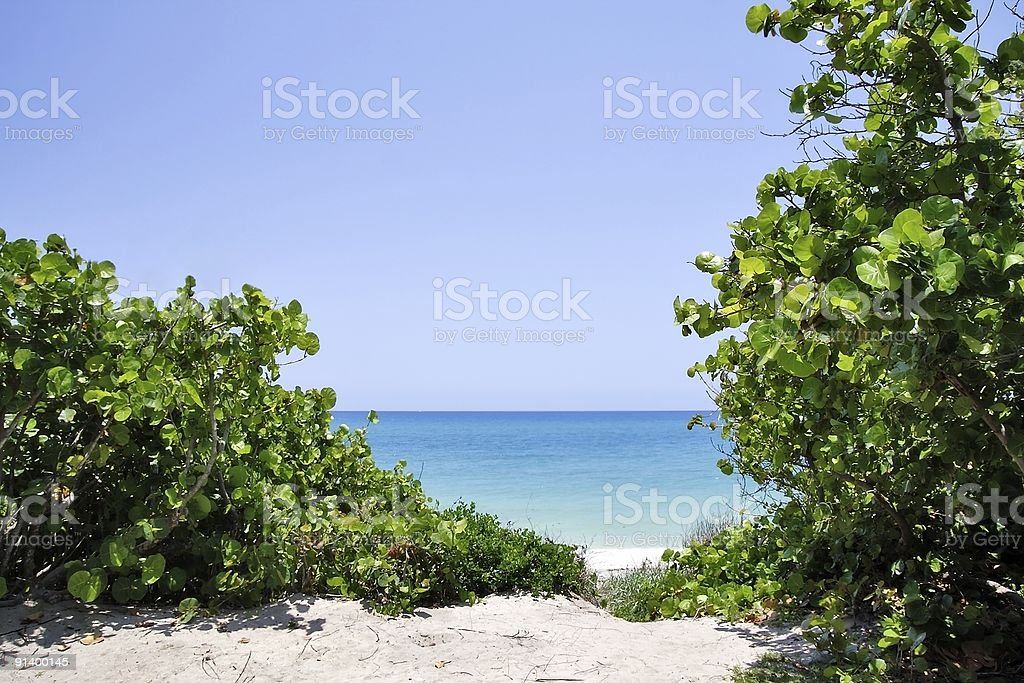 Tropic Summer stock photo