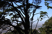 tropic tree