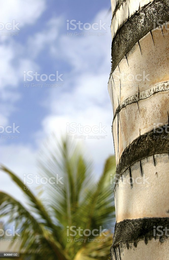 Tropical Abstract royalty-free stock photo