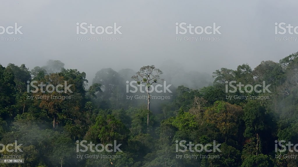 Tropical Amazon forest landscape stock photo