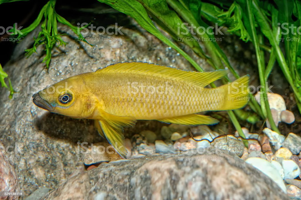 Tropical aquarium fish stock photo
