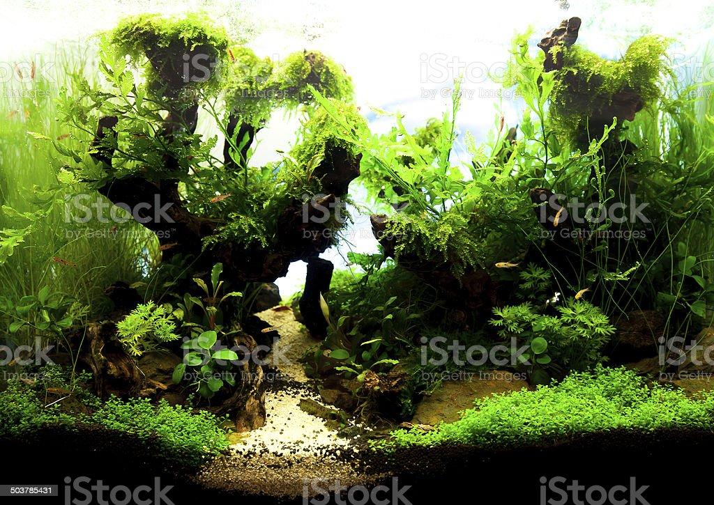 Tropical aquarium stock photo
