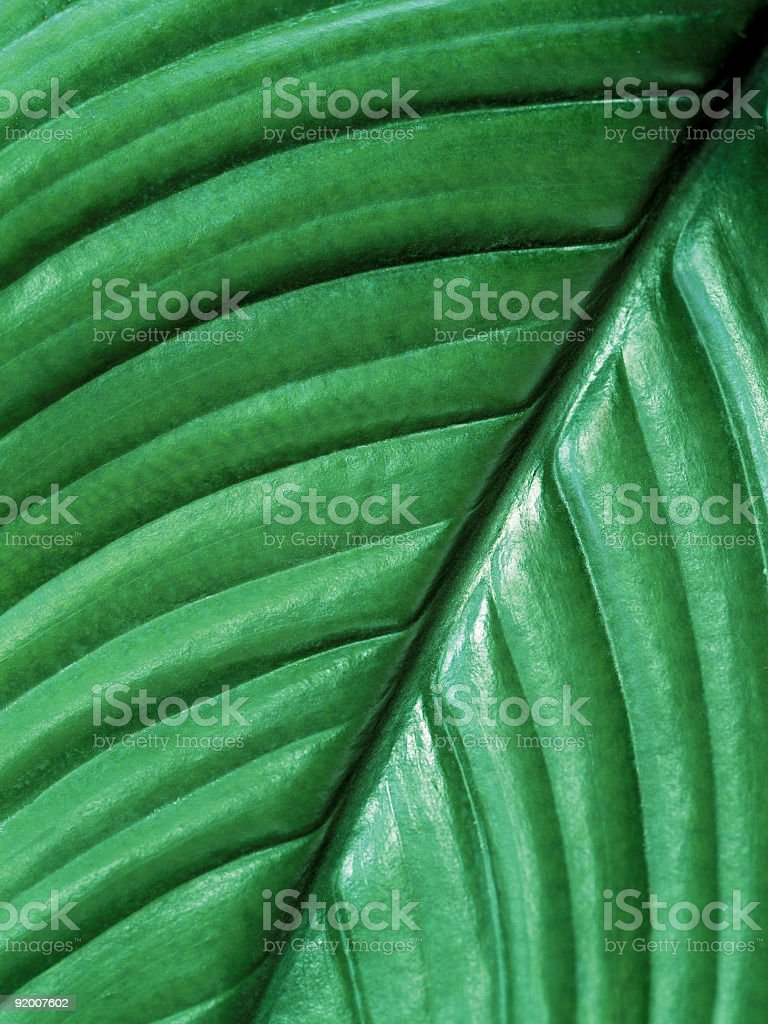 Tropical background royalty-free stock photo