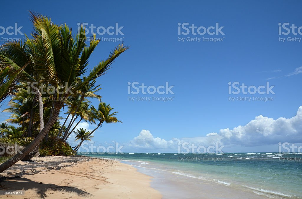Tropical Beach 3 royalty-free stock photo