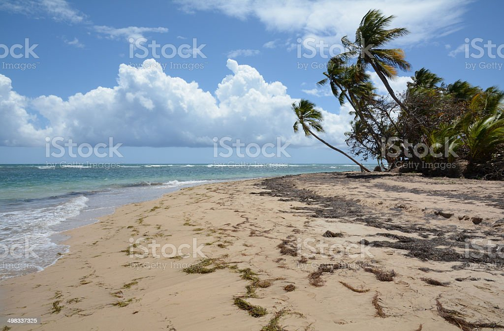Tropical Beach 5 royalty-free stock photo