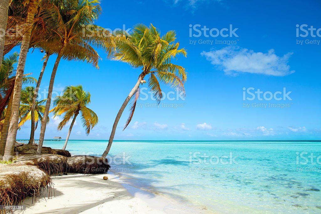 Tropical beach, blue sky, palm trees, turquoise sea water, summer stock photo