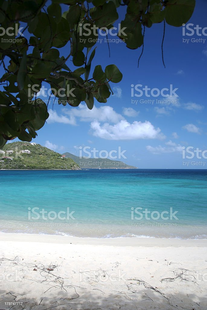 Tropical Beach Framed by Seagrape Branches stock photo
