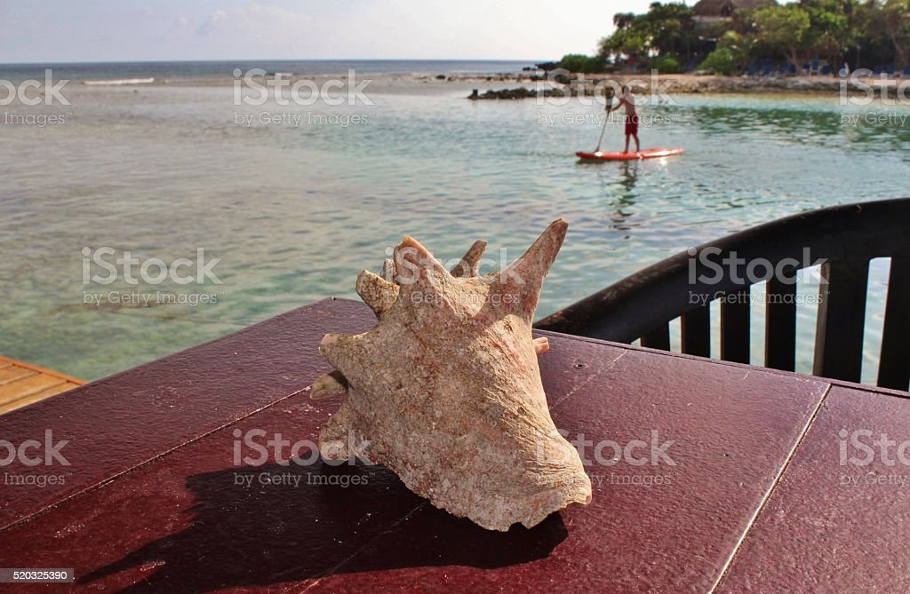 Tropical beach front with conch and paddleboard stock photo