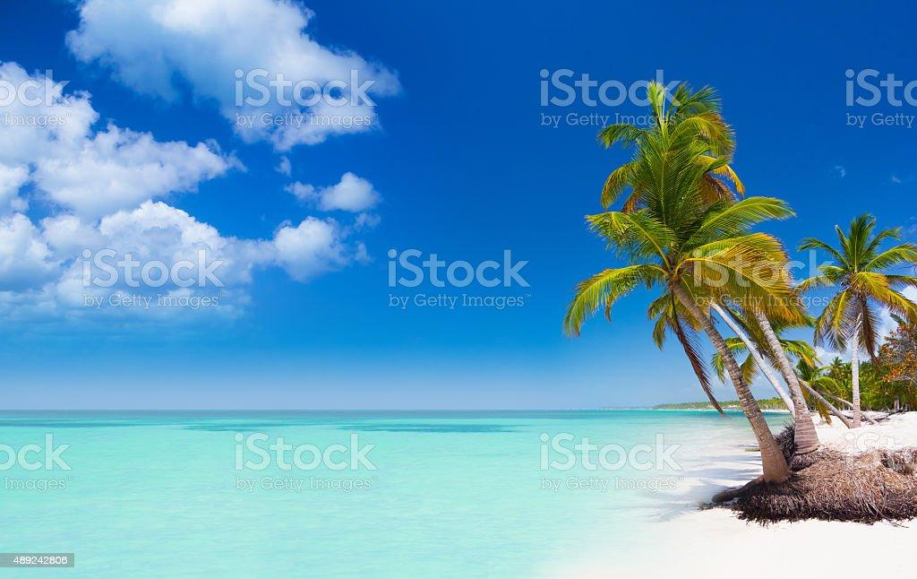 Tropical beach in Dominican Republic stock photo