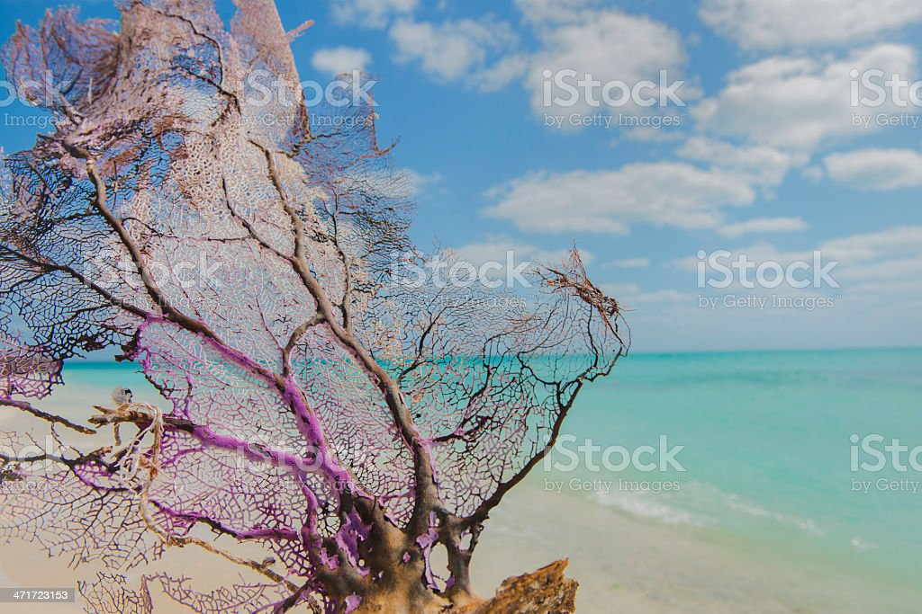 Tropical Beach in Dry Tortugas National Park stock photo