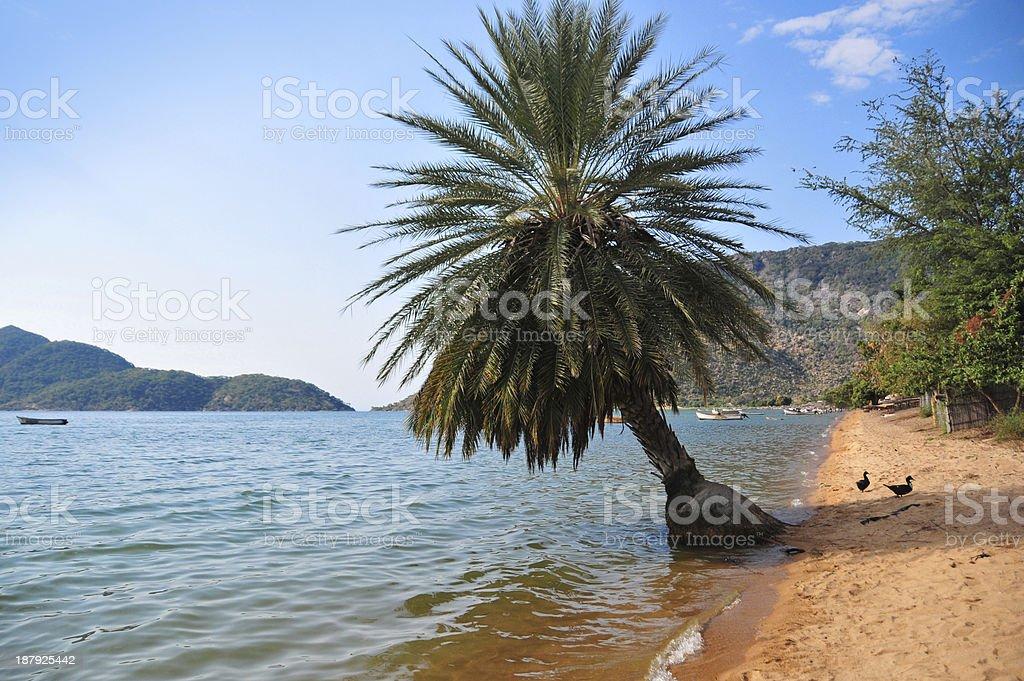 tropical beach on Lake Malawi, Cape Maclear stock photo