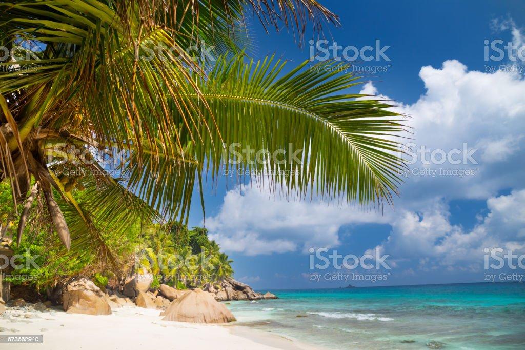 Tropical beach on Seychelles stock photo