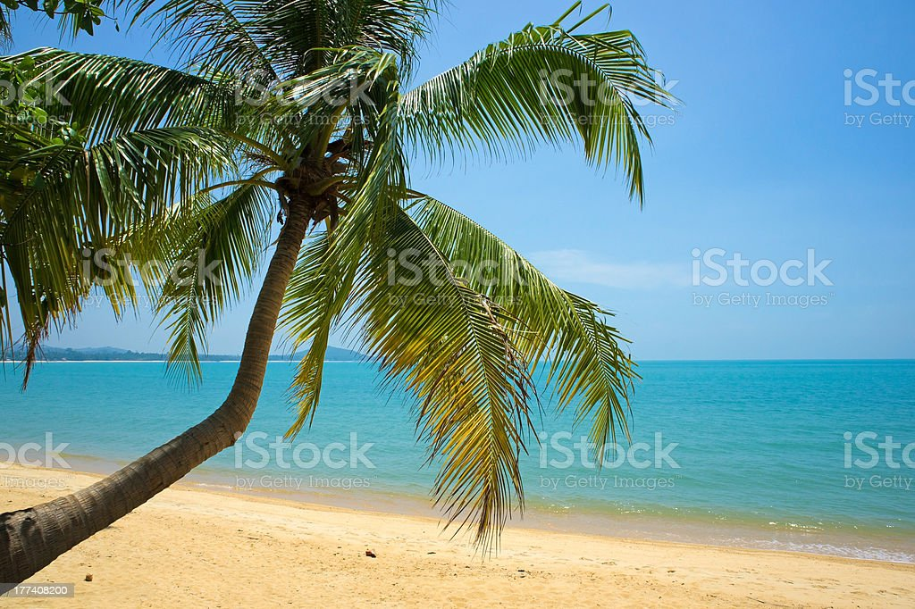 Tropical Beach Palm royalty-free stock photo