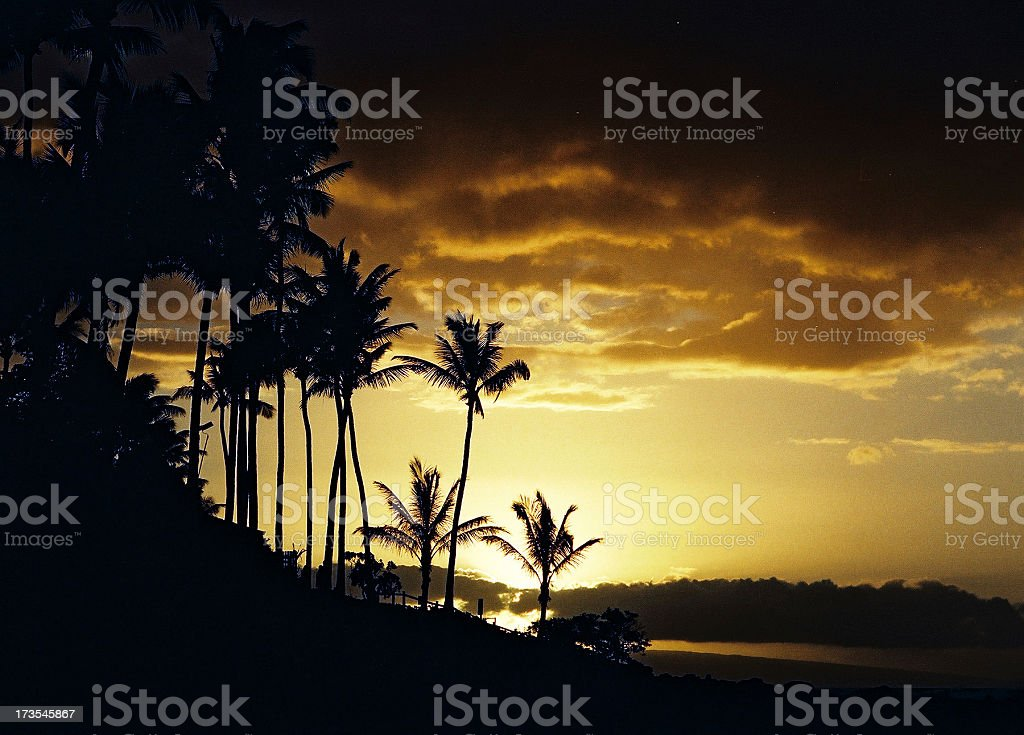 Tropical beach palm tree sunset royalty-free stock photo