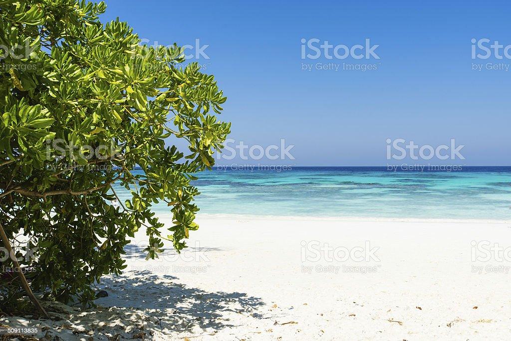 Tropisches Paradies Hintergrund Lizenzfreies stock-foto