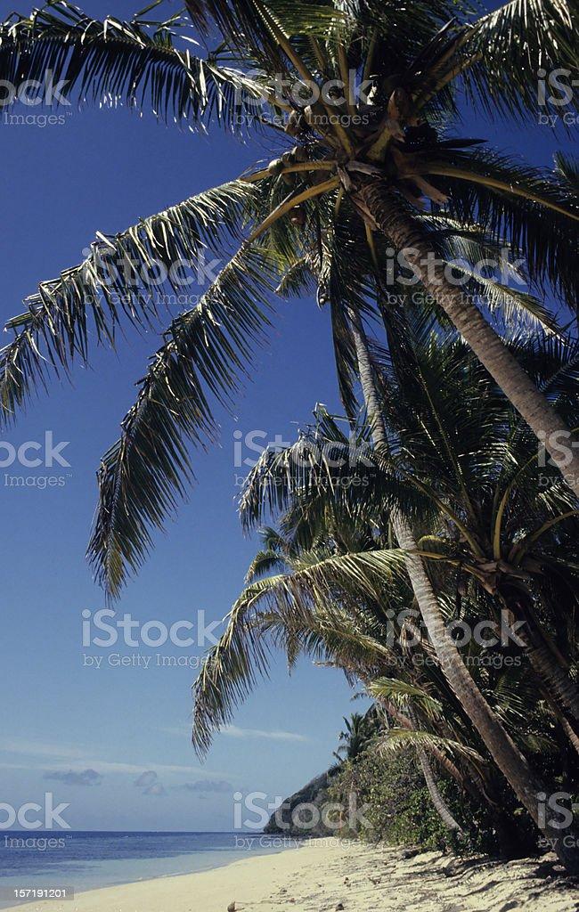 Tropical Beach #1 stock photo