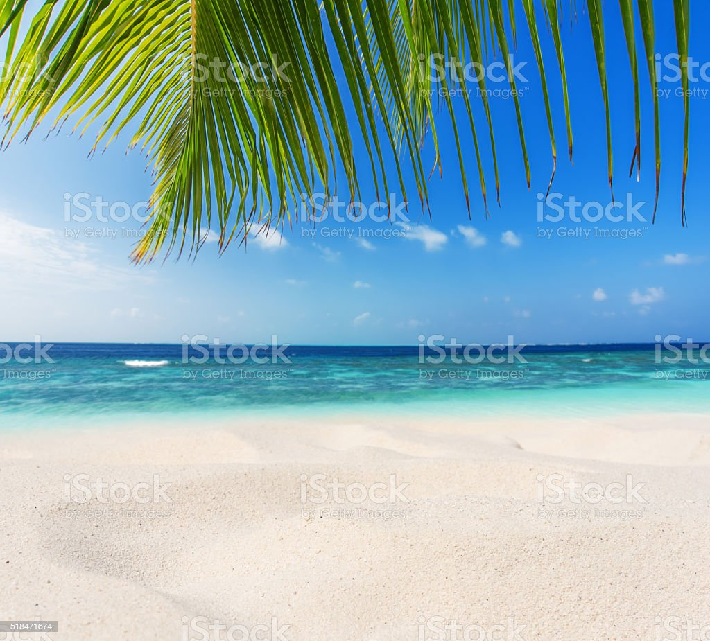 Tropical beach sand dune stock photo