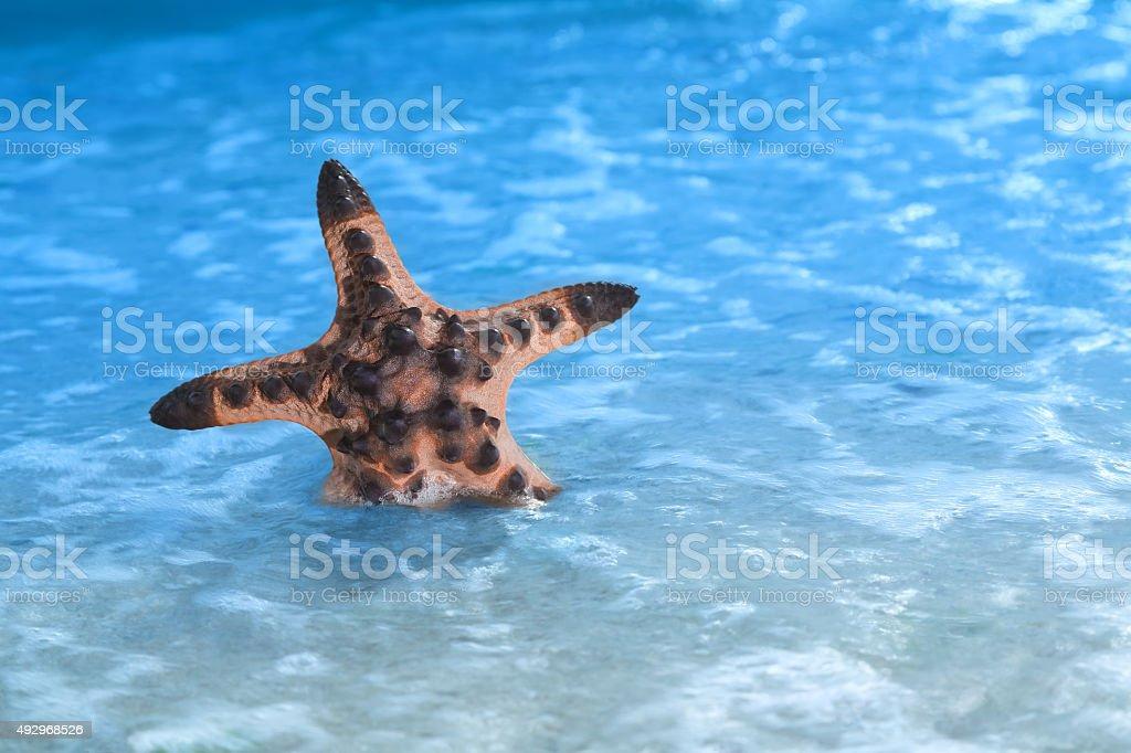 Tropischen Strand Seestern Lizenzfreies stock-foto