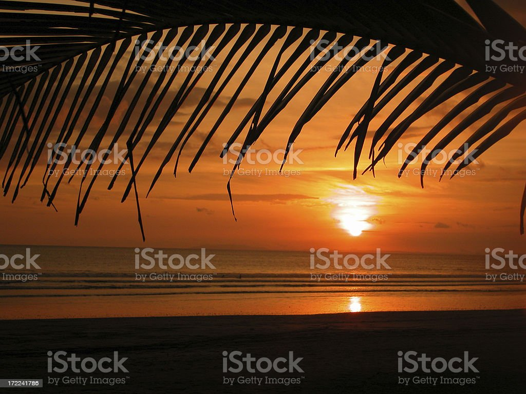 Tropical Beach Sunset and Palm Trees royalty-free stock photo