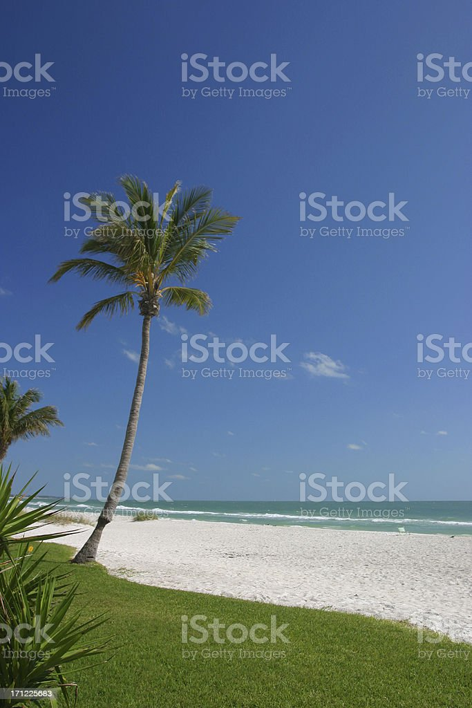 Tropical Beach Vacation Florida Palm stock photo