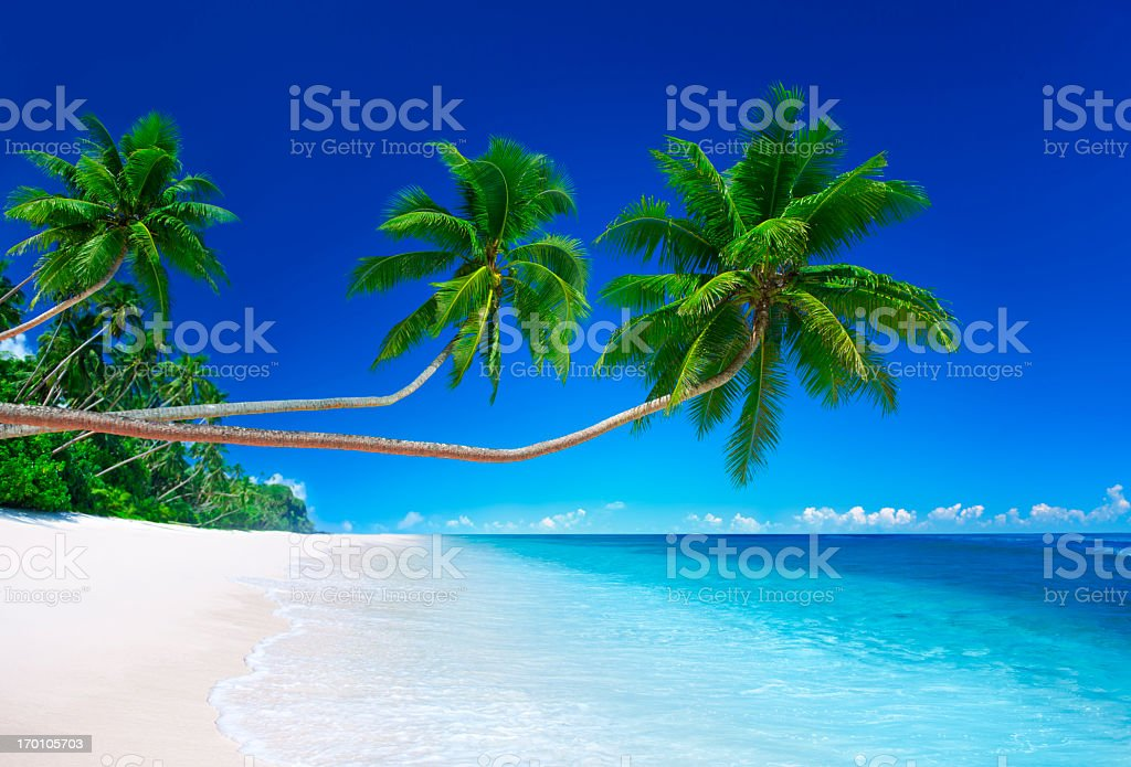 Tropical beach with baby blue weather and coconut trees royalty-free stock photo
