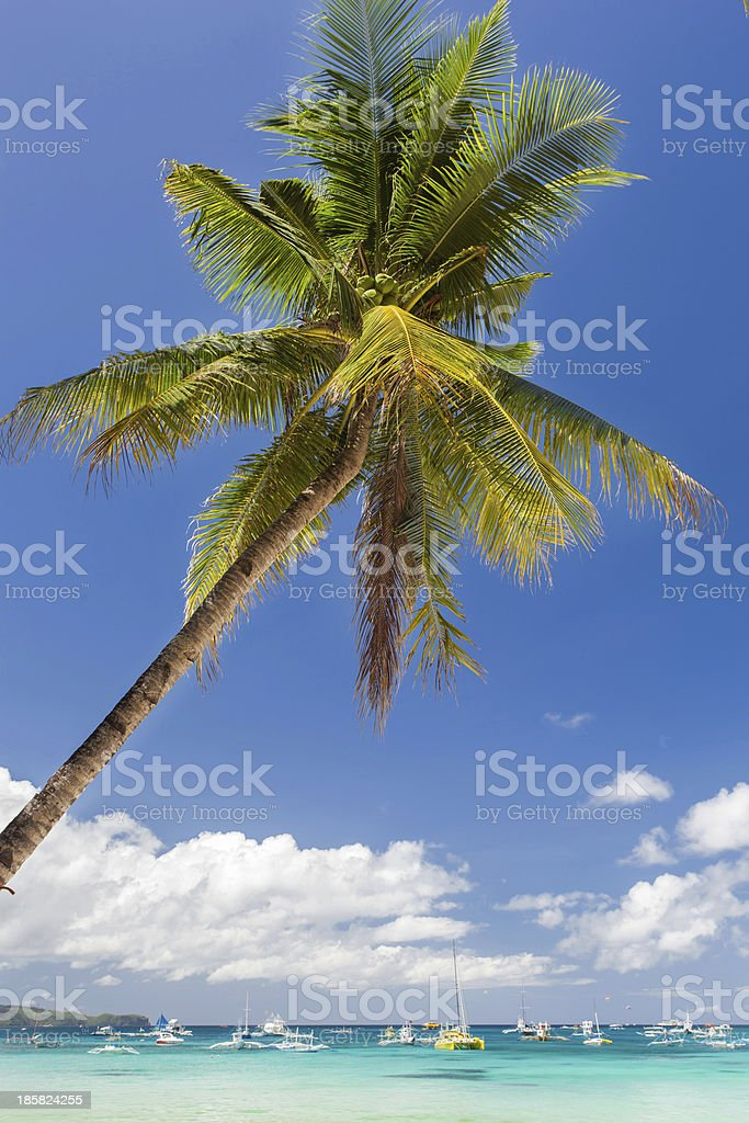 Tropical beach with beautiful palm and white sand royalty-free stock photo