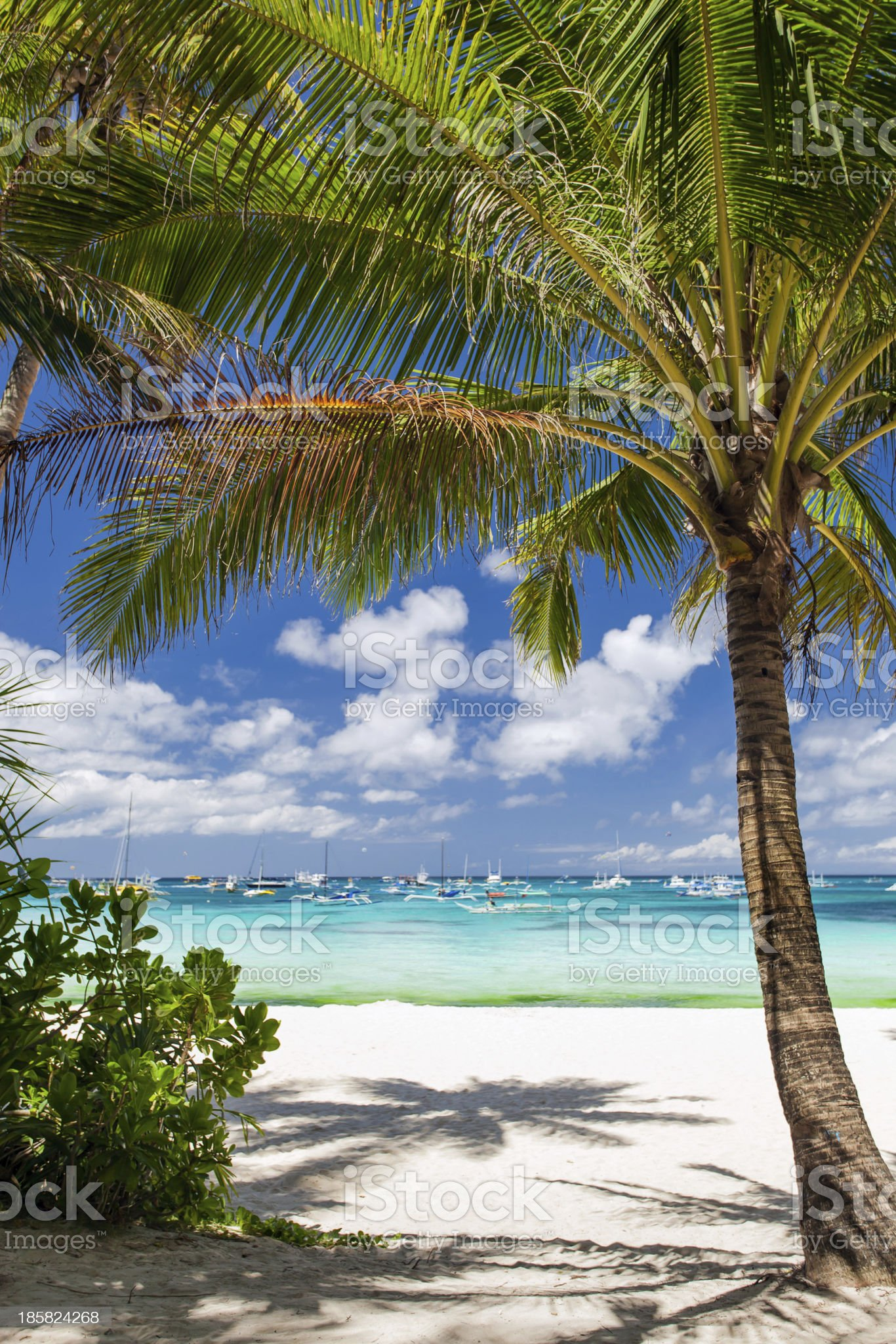 Tropical beach with beautiful palm royalty-free stock photo
