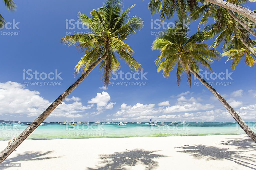 Tropical beach with beautiful palms and white sand royalty-free stock photo