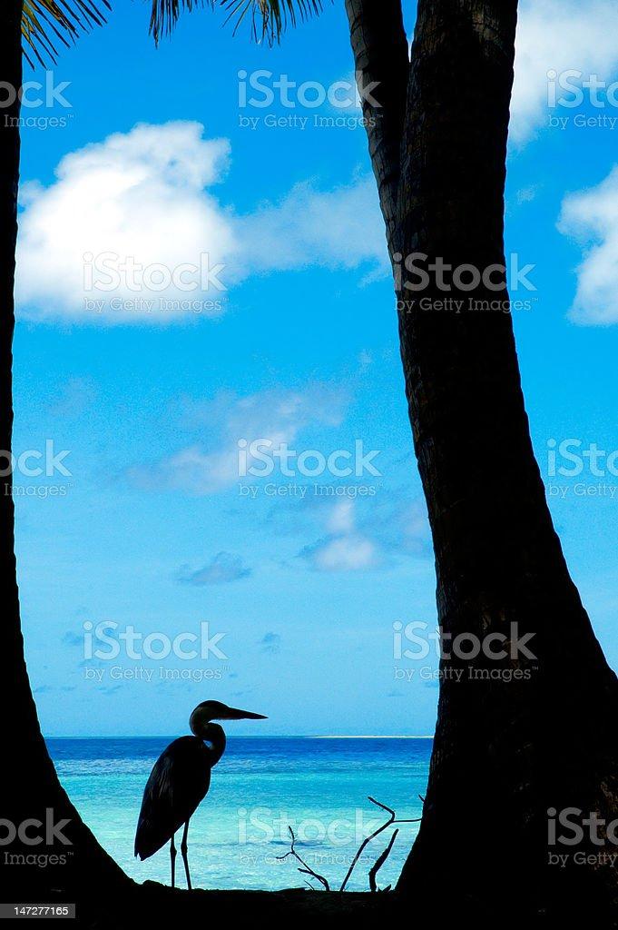 Tropical beach with bird royalty-free stock photo