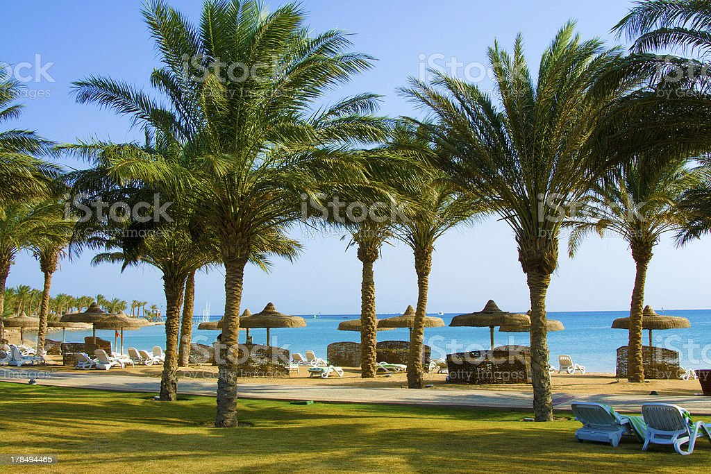 Tropical Beach with Coconut Palm Trees stock photo