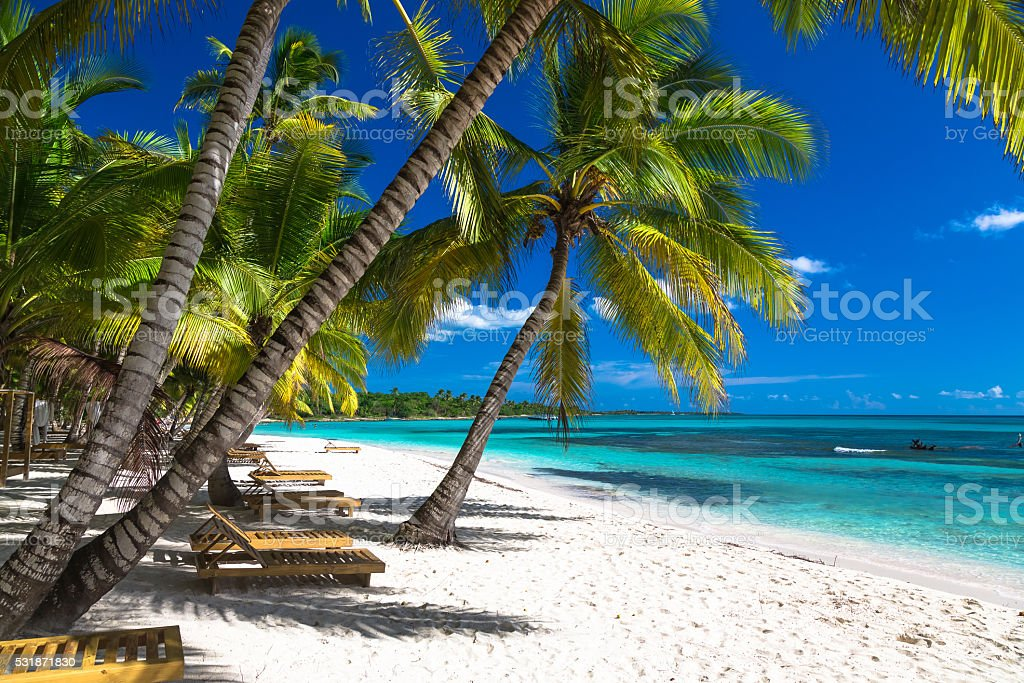 Tropical beach with corals in caribbean sea, Saona, Dominican Republic stock photo