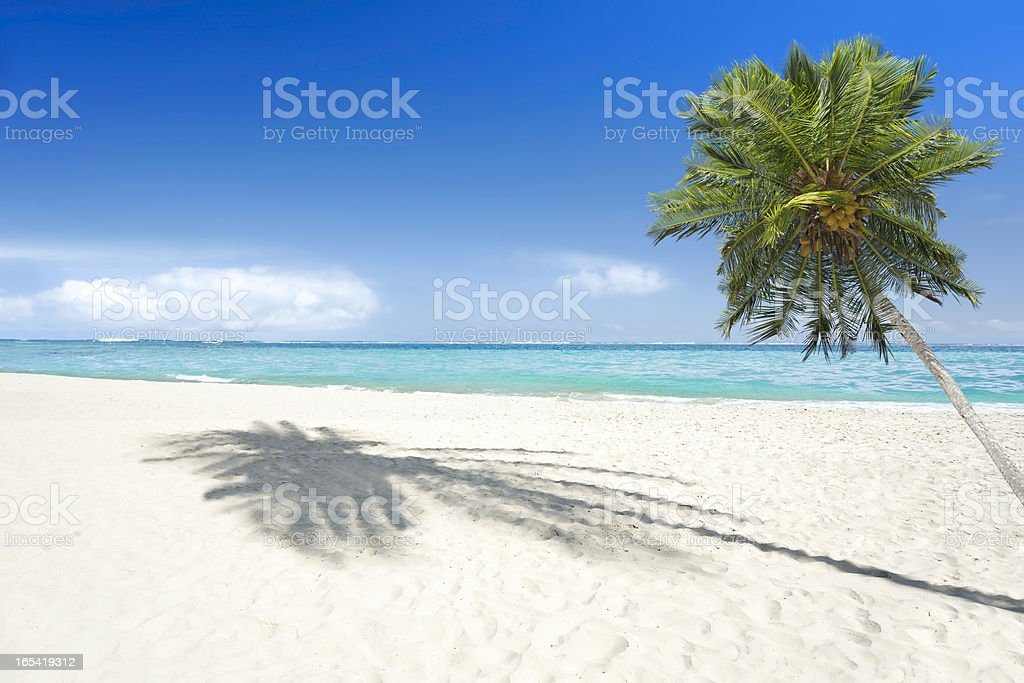 Tropical beach with palm tree royalty-free stock photo