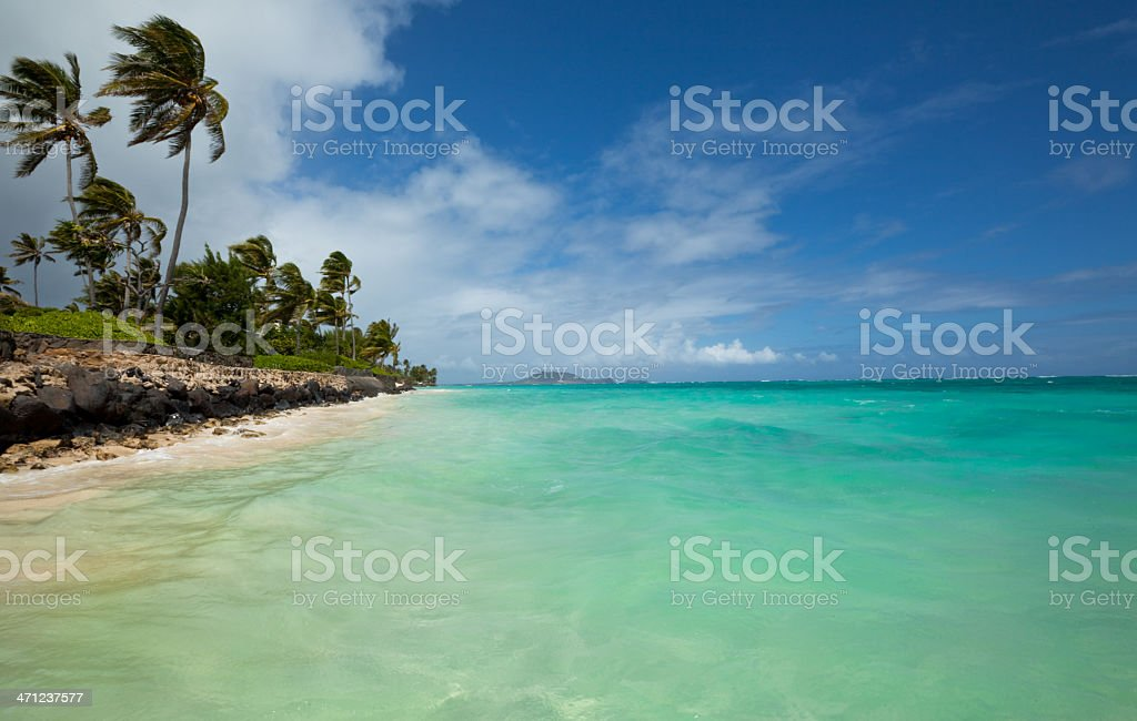 Tropical beach with palm trees and turquoise ocean stock photo