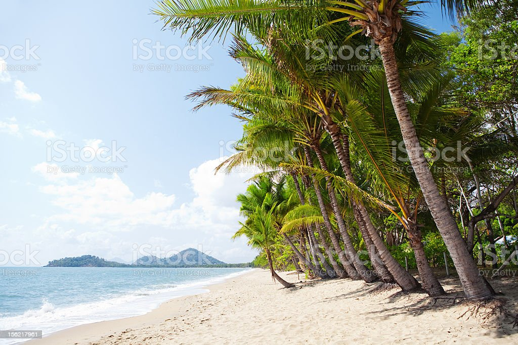 Tropical beach with palm trees in north Queensland stock photo