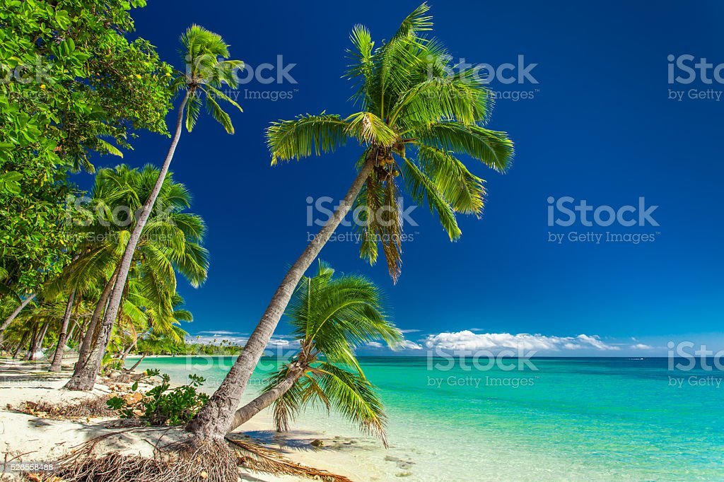 Tropical beach with palm trees on Fiji Islands stock photo
