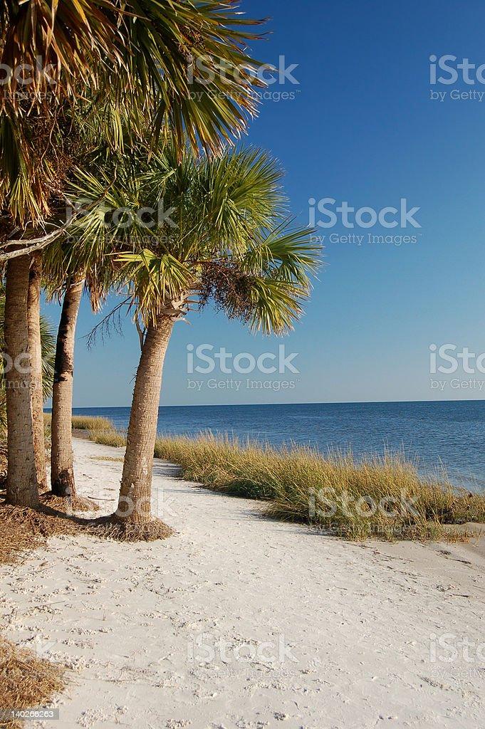 Playa Tropical con palmeras foto de stock libre de derechos