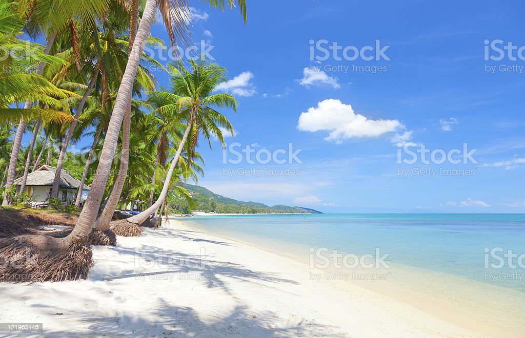 Tropical beach with palm trees under blue sky stock photo